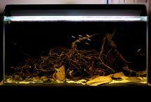 Biotope / Natural Aquarium Ideas