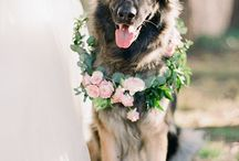 Puppers in Weddings