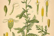 bitki resimleri