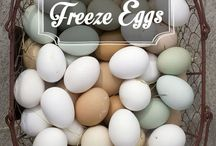 freeze eggs