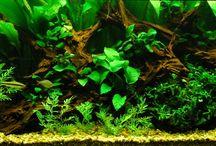 Planted aquariums and tiny gardens