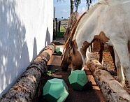 DIY for horses