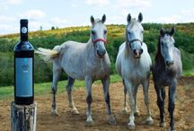Lipitan horses