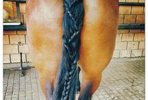 Häst flätor