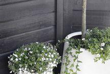 Buitenpotten & Plantenbakken / Met plantenpotten kan je van iedere tuin of ieder balkon een groene bedoeling maken. Daarnaast kan het bijdragen aan een specifieke sfeer in je tuin! Welke plantenpotten passen het best bij jouw tuin?