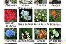 Flores comestíveis e não comestiveis