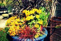 Gardening: Container Gardens / by Wayfaring Stranger