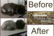 Cat Before and Afters / Cats like to be groomed too! Check out our before and after shots of our adorable kitties.