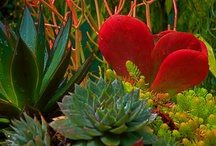 Garden Color  / by Jenny Nybro Peterson