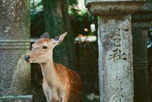 ~~Nara~~