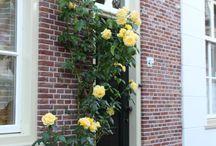 Stads tuinieren / bloemen, planten en mini tuintjes in een (binnen) stad, kortom stadstuinieren.