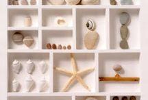 conchas caracolas