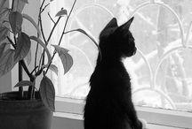 Martina ;) / Gatos, cats!!!