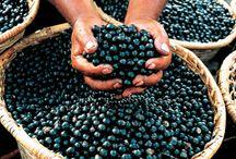 """Monavie / Monavie bietet Prävention mit reiner Natur! Mit 19 ausgewählten Früchten deren Synergien sich gegenseitig ergänzen und damit einen unübertroffenen antioxidativen Schutz für das Imunsystem des Körpers bilden, kann sich kaum ein """"Erreger"""" dem entziehen! :-)"""