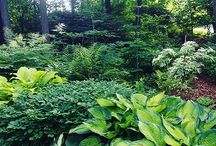Trädgård i skugga