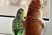 Cute Birds! / by Bird B Gone, Inc.