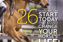 Your Horse's Care & Wellbeing / horse / health / vet / care / stable management / illness / lameness