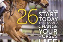 Horsekeeping / horse / health / vet / care / stable management / illness / lameness