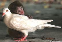Animals / by Sadie Bollman