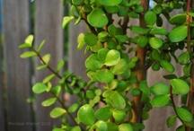 TREES FOR MY GARDEN