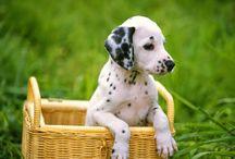 honden / honden plaatjes