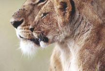Löwen....Kevin Richardson....<3