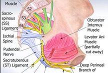 Pelvis dysfunctions