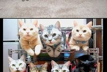 Cats (closed -->  Cats II) / by Nico R.