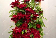 flores -aliexpress