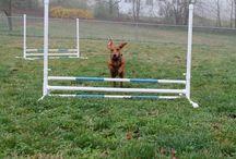 Dog nerd / Agility, training, treats & more.  / by Sarah LaDuke