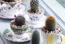 minivirágok-kaktuszok