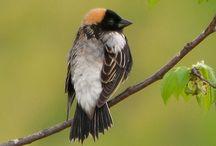 Birds / The birds of Mountain Breeze Farm