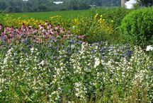 Native Perennial Beds / Like perennial beds? Check out these landscaped with native plants.