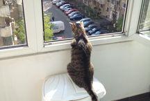 My urban cat / Cat