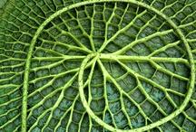 pattern nature