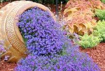 bahçe ve çiçekler