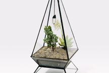 Plants / Terrariums / Vases