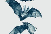 Batsssss