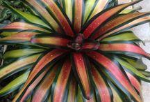 rośliny tropikalne różne