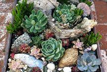 Bahce bitki