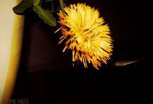 floral / Hier poste ich eigene, bearbeitete Fotos. Manchmal mit copyright-Zeichen Sophie Panzer, manchmal über Picmonkey. Mit Picmonkey mache ich Fotobearbeitungen.   Ich poste hier auch bei Pinterest gefundene Bilder.