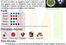 Vinhos - tipos de uvas