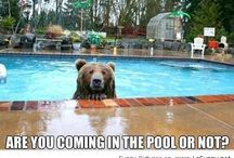 Inspiration and Humor / We all need a good laugh and inspiration... #swimming  #pools
