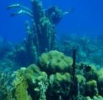 Cool Dive Sites!