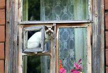 Kissa ikkunat