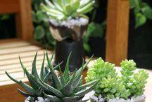 Jardín con reciclado