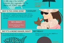 No to animal cruelty