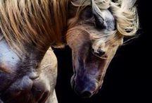 cab@llos - horses / very beautifull / by Melissa García