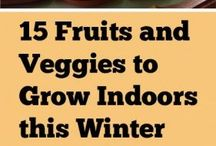 grow veggies in winter