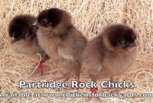Partridge Rock